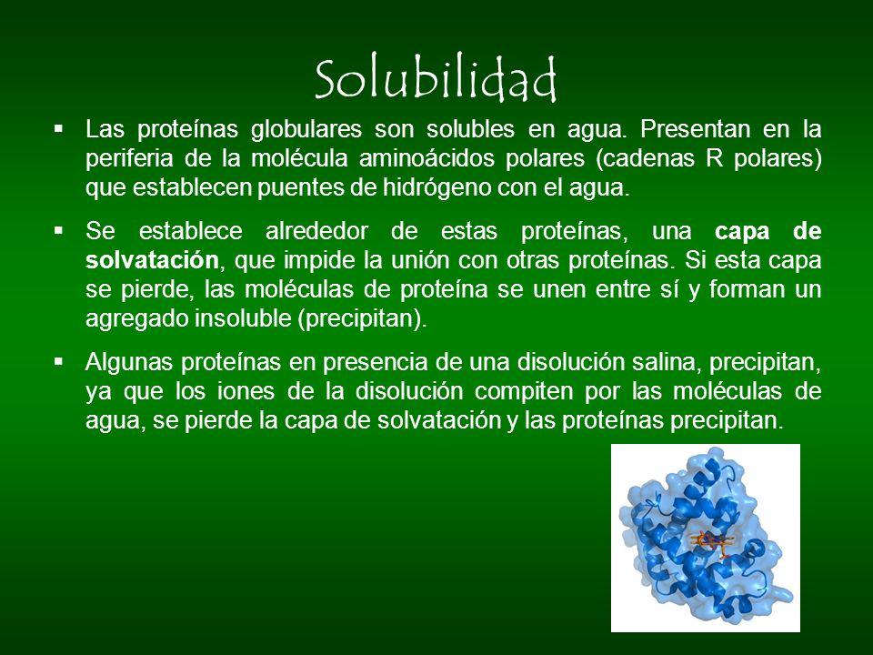 Solubilidad Las proteínas globulares son solubles en agua. Presentan en la periferia de la molécula aminoácidos polares (cadenas R polares) que establ