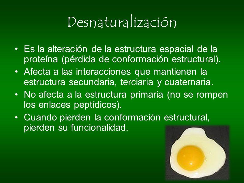 Desnaturalización Es la alteración de la estructura espacial de la proteína (pérdida de conformación estructural). Afecta a las interacciones que mant