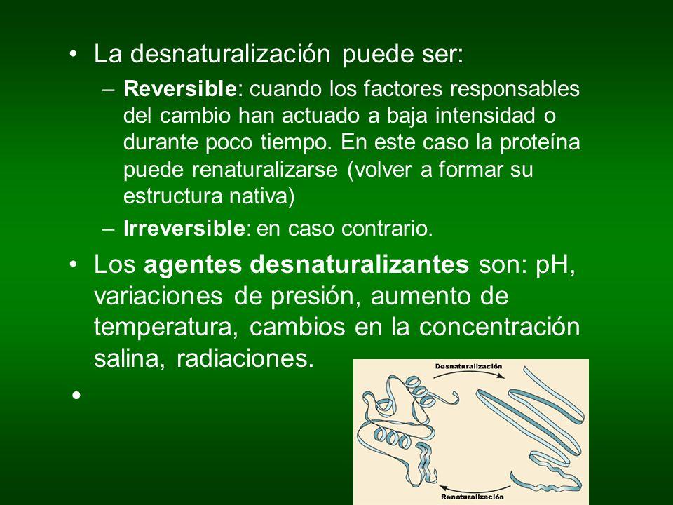 La desnaturalización puede ser: –Reversible: cuando los factores responsables del cambio han actuado a baja intensidad o durante poco tiempo. En este