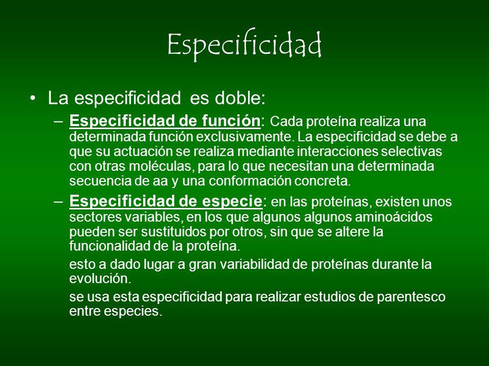Especificidad La especificidad es doble: –Especificidad de función: Cada proteína realiza una determinada función exclusivamente. La especificidad se