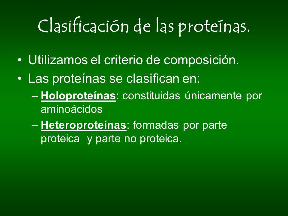 Clasificación de las proteínas. Utilizamos el criterio de composición. Las proteínas se clasifican en: –Holoproteínas: constituidas únicamente por ami