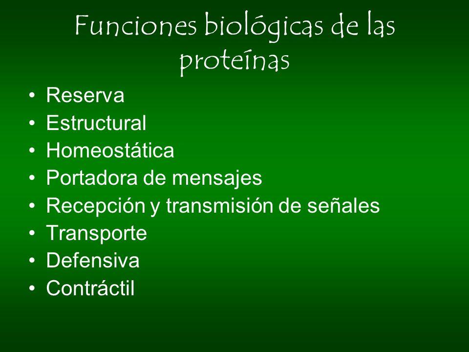 Funciones biológicas de las proteínas Reserva Estructural Homeostática Portadora de mensajes Recepción y transmisión de señales Transporte Defensiva C