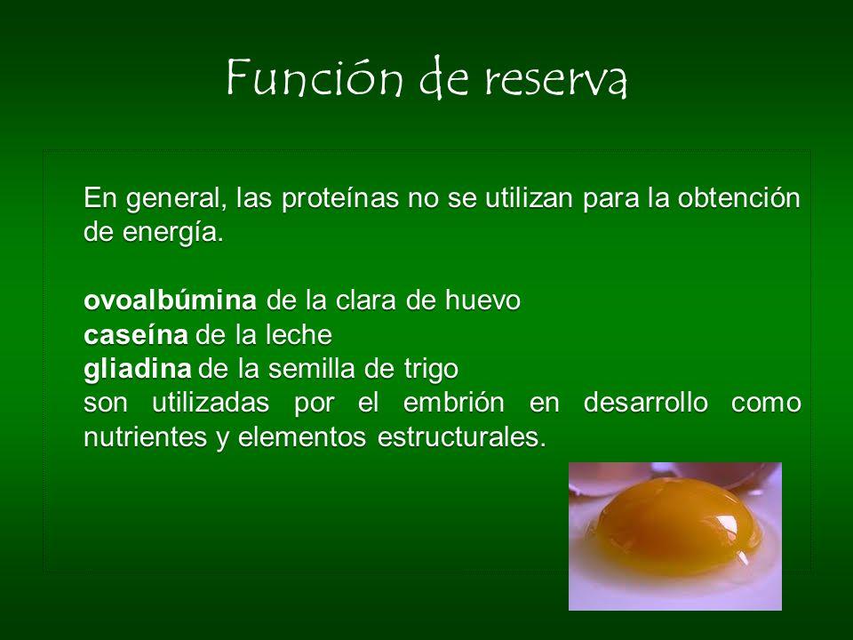 Función de reserva En general, las proteínas no se utilizan para la obtención de energía. ovoalbúmina de la clara de huevo caseína de la leche gliadin
