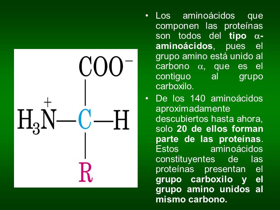Los aminoácidos que componen las proteínas son todos del tipo - aminoácidos, pues el grupo amino está unido al carbono, que es el contiguo al grupo ca
