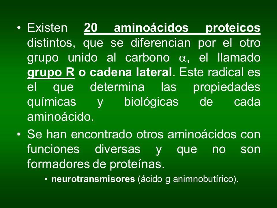 Existen 20 aminoácidos proteicos distintos, que se diferencian por el otro grupo unido al carbono, el llamado grupo R o cadena lateral. Este radical e
