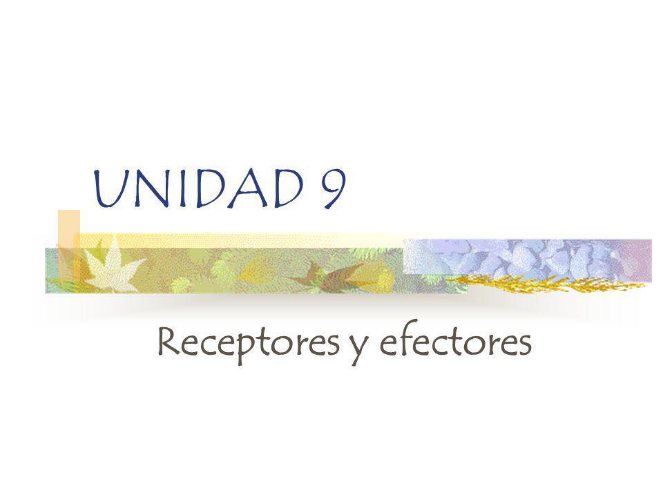 UNIDAD 9 Receptores y efectores