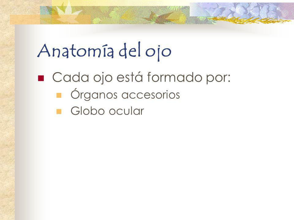 Anatomía del ojo Cada ojo está formado por: Órganos accesorios Globo ocular