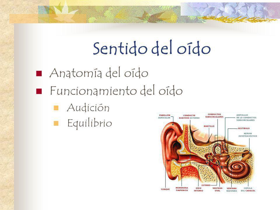 Sentido del oído Anatomía del oído Funcionamiento del oído Audición Equilibrio
