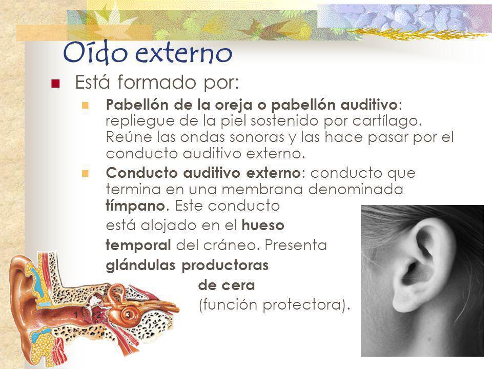 Oído externo Está formado por: Pabellón de la oreja o pabellón auditivo : repliegue de la piel sostenido por cartílago. Reúne las ondas sonoras y las
