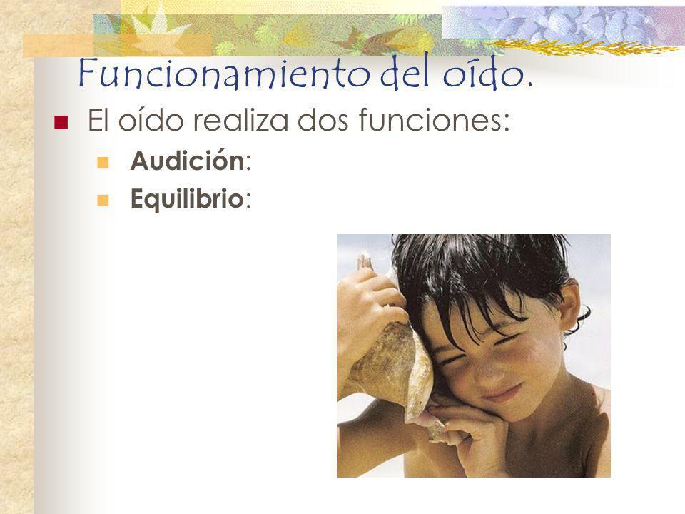 Funcionamiento del oído. El oído realiza dos funciones: Audición : Equilibrio :