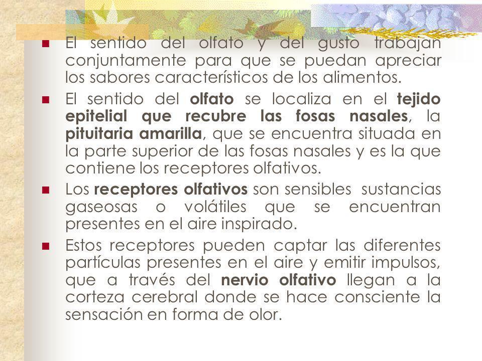 El sentido del olfato y del gusto trabajan conjuntamente para que se puedan apreciar los sabores característicos de los alimentos. El sentido del olfa