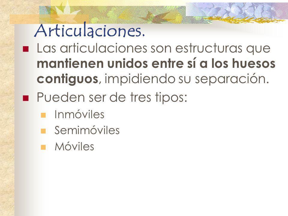 Articulaciones. Las articulaciones son estructuras que mantienen unidos entre sí a los huesos contiguos, impidiendo su separación. Pueden ser de tres