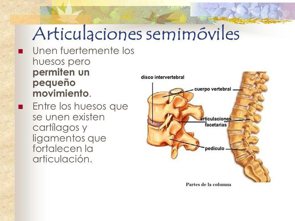 Articulaciones semimóviles Unen fuertemente los huesos pero permiten un pequeño movimiento. Entre los huesos que se unen existen cartílagos y ligament