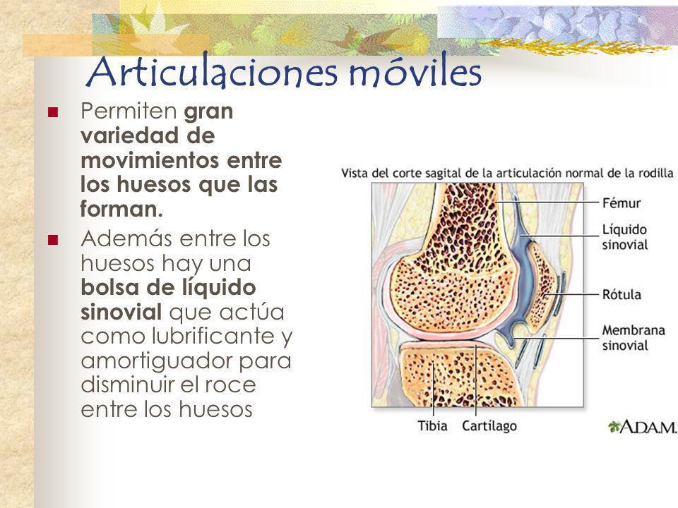 Articulaciones móviles Permiten gran variedad de movimientos entre los huesos que las forman. Además entre los huesos hay una bolsa de líquido sinovia