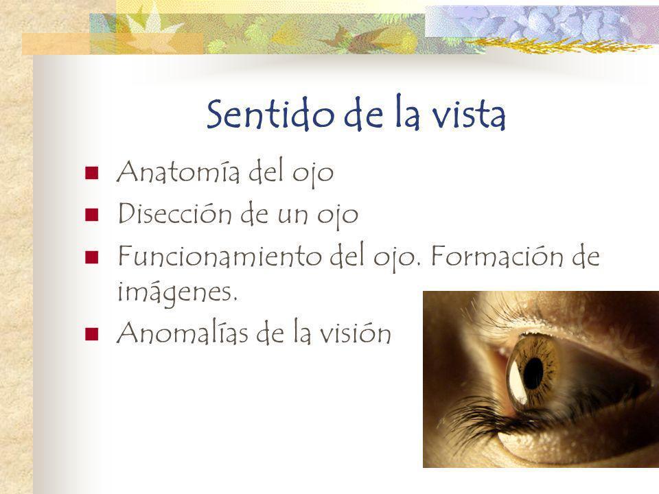 Sentido de la vista Anatomía del ojo Disección de un ojo Funcionamiento del ojo. Formación de imágenes. Anomalías de la visión