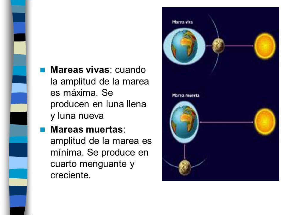 Mareas vivas: cuando la amplitud de la marea es máxima. Se producen en luna llena y luna nueva Mareas muertas: amplitud de la marea es mínima. Se prod