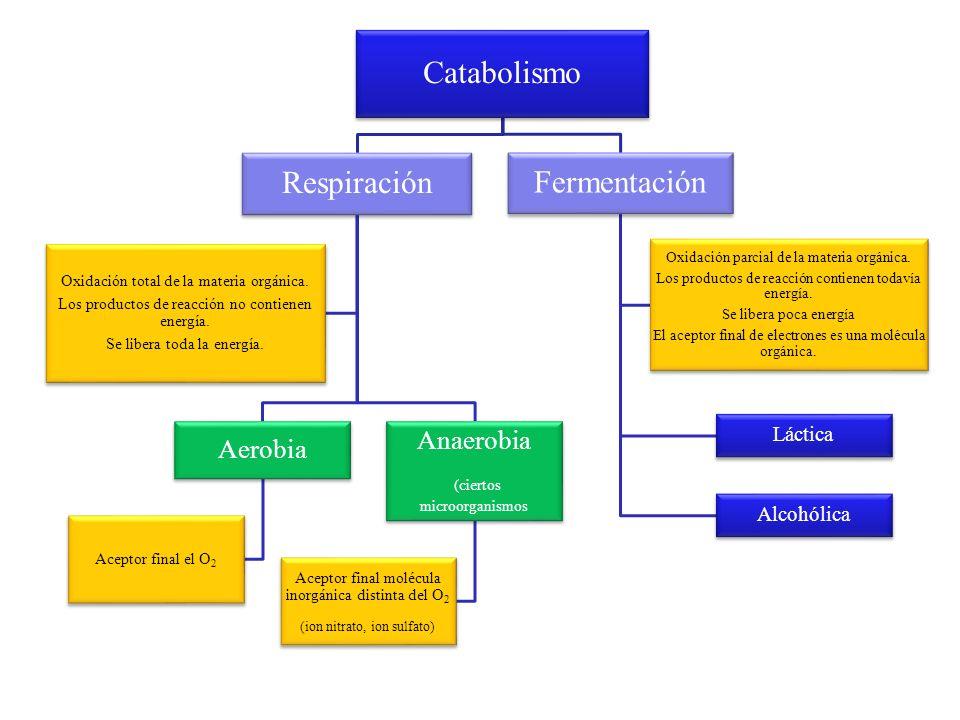 Catabolismo Respiración Aerobia Aceptor final el O2 Anaerobia (ciertos microorganismos Aceptor final molécula inorgánica distinta del O2 (ion nitrato,