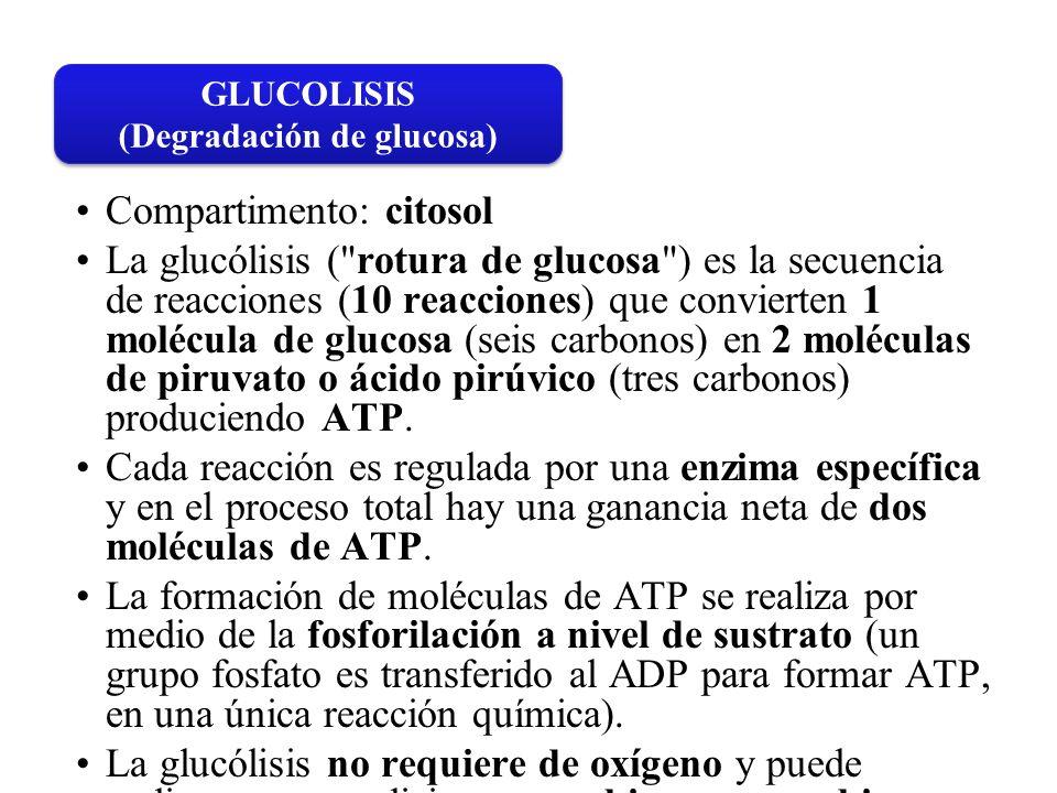 Compartimento: citosol La glucólisis (