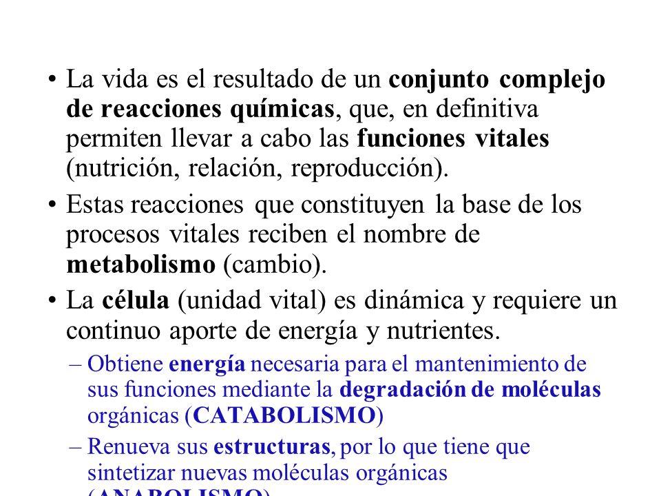 La vida es el resultado de un conjunto complejo de reacciones químicas, que, en definitiva permiten llevar a cabo las funciones vitales (nutrición, re
