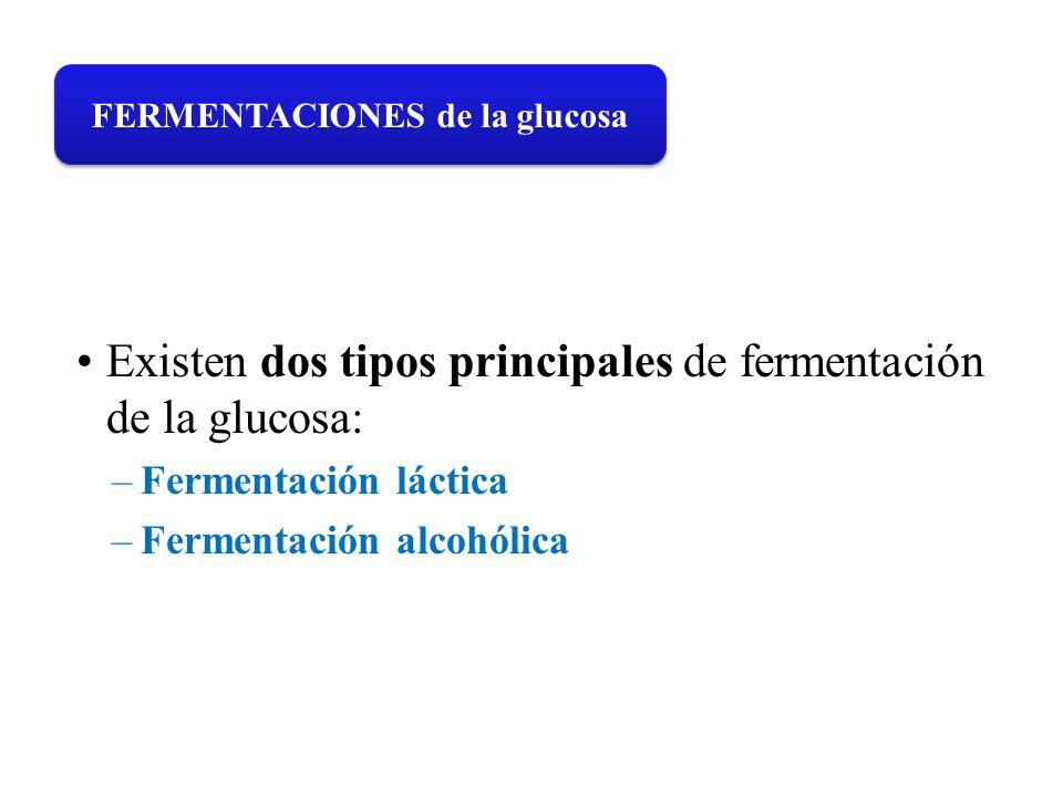 Existen dos tipos principales de fermentación de la glucosa: –Fermentación láctica –Fermentación alcohólica FERMENTACIONES de la glucosa