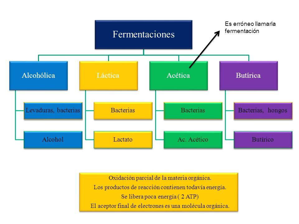 Oxidación parcial de la materia orgánica. Los productos de reacción contienen todavía energía. Se libera poca energía ( 2 ATP) El aceptor final de ele