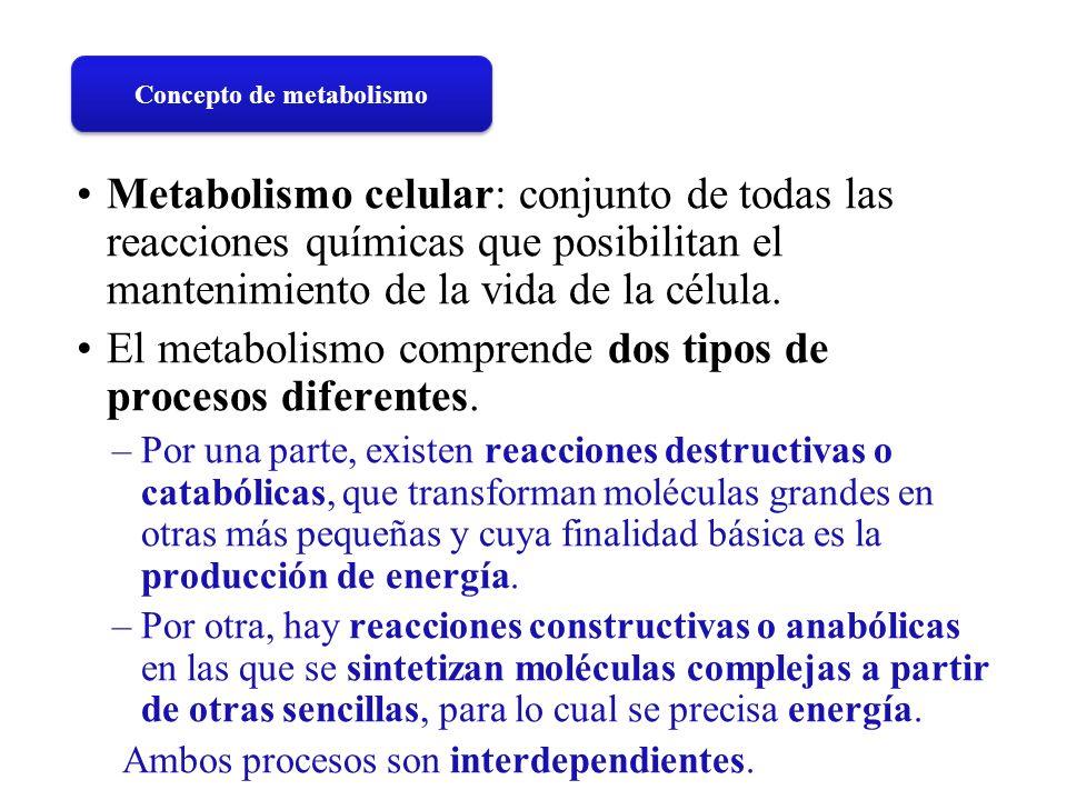 Metabolismo celular: conjunto de todas las reacciones químicas que posibilitan el mantenimiento de la vida de la célula. El metabolismo comprende dos