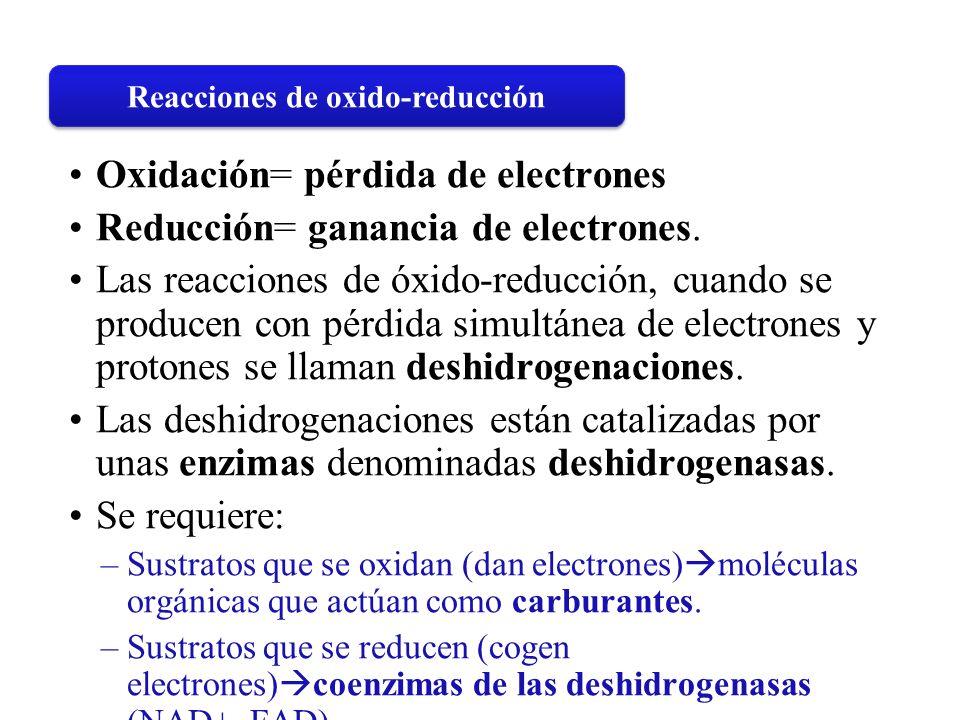 Oxidación= pérdida de electrones Reducción= ganancia de electrones. Las reacciones de óxido-reducción, cuando se producen con pérdida simultánea de el