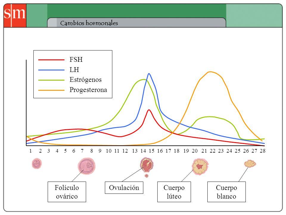 Cambios hormonales 1 2 3 4 5 6 7 8 9 10 11 12 13 14 15 16 17 18 19 20 21 22 23 24 25 26 27 28 FSH LH Estrógenos Progesterona Folículo ovárico Ovulació