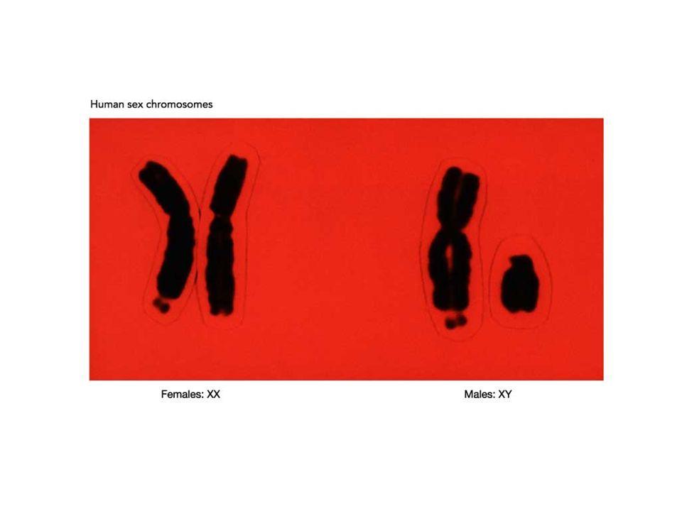 La formación y maduración de los espermatozoides se debe a la acción de la hormona foliculo estimulante ( FSH ) producida en la hipófisis
