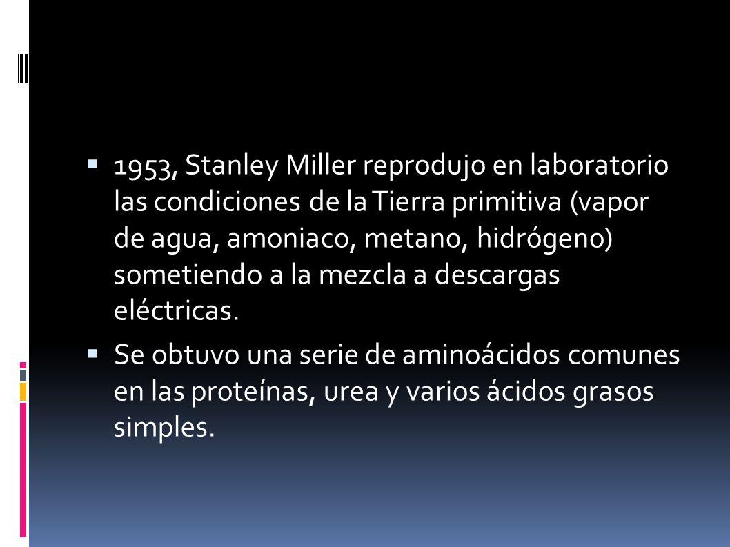 1953, Stanley Miller reprodujo en laboratorio las condiciones de la Tierra primitiva (vapor de agua, amoniaco, metano, hidrógeno) sometiendo a la mezc