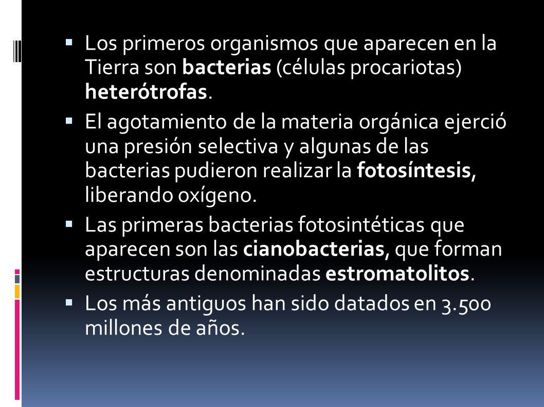 Los primeros organismos que aparecen en la Tierra son bacterias (células procariotas) heterótrofas. El agotamiento de la materia orgánica ejerció una