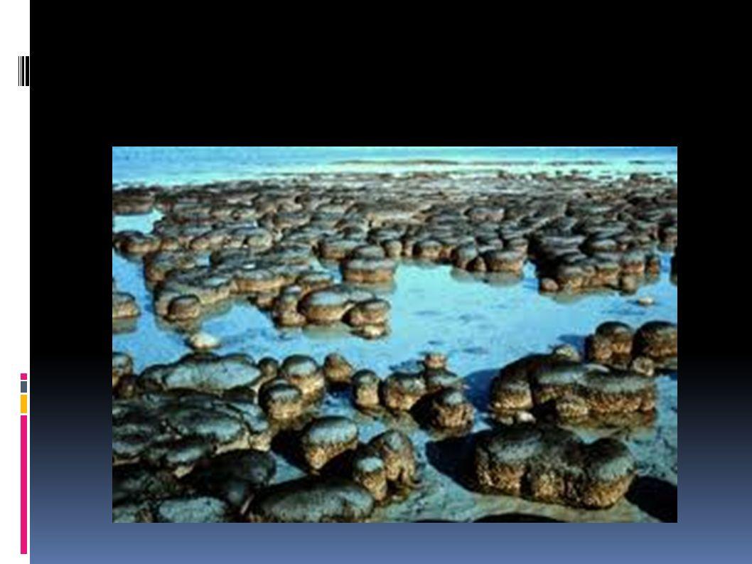 Aparecen los organismos eucariotas.Primeros fósiles datan de 2.100 millones de años.