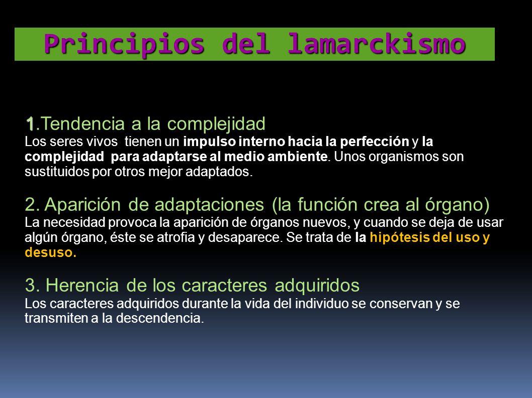 1 1.Tendencia a la complejidad Los seres vivos tienen un impulso interno hacia la perfección y la complejidad para adaptarse al medio ambiente. Unos o