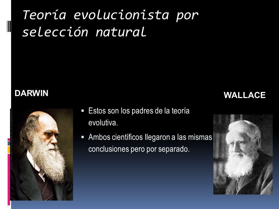 Teoría evolucionista por selección natural Estos son los padres de la teoría evolutiva. Ambos científicos llegaron a las mismas conclusiones pero por