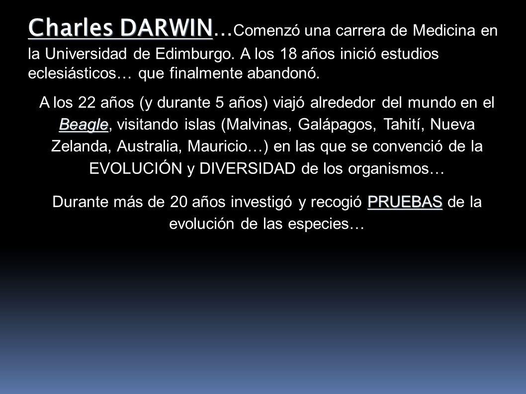 Antes de la publicación de su teoría, Darwin: Viaje en el Beagle Descubrimiento de multitud de especies vivas y fósiles Lectura del libro de Malthus.