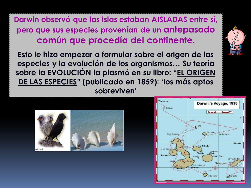 Darwin observó que las islas estaban AISLADAS entre sí, pero que sus especies provenían de un antepasado común que procedía del continente. Esto le hi