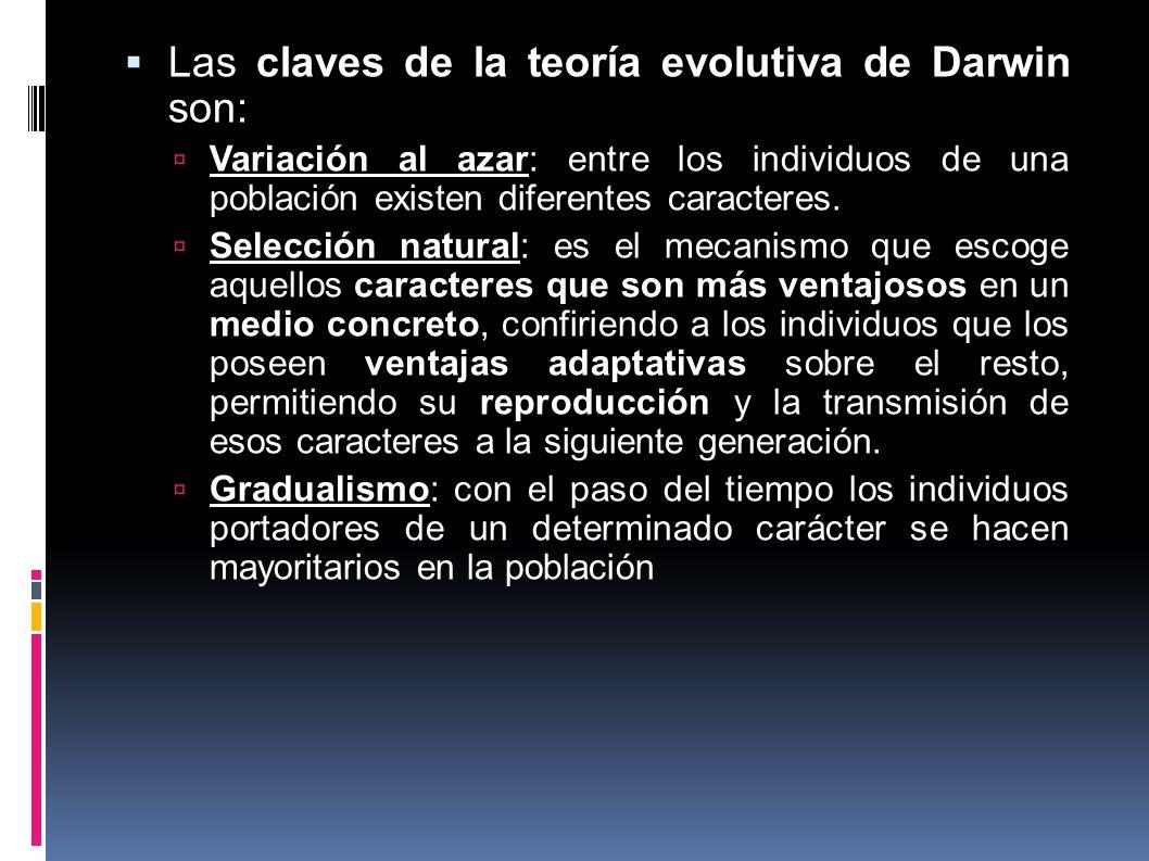 Las claves de la teoría evolutiva de Darwin son: Variación al azar: entre los individuos de una población existen diferentes caracteres. Selección nat