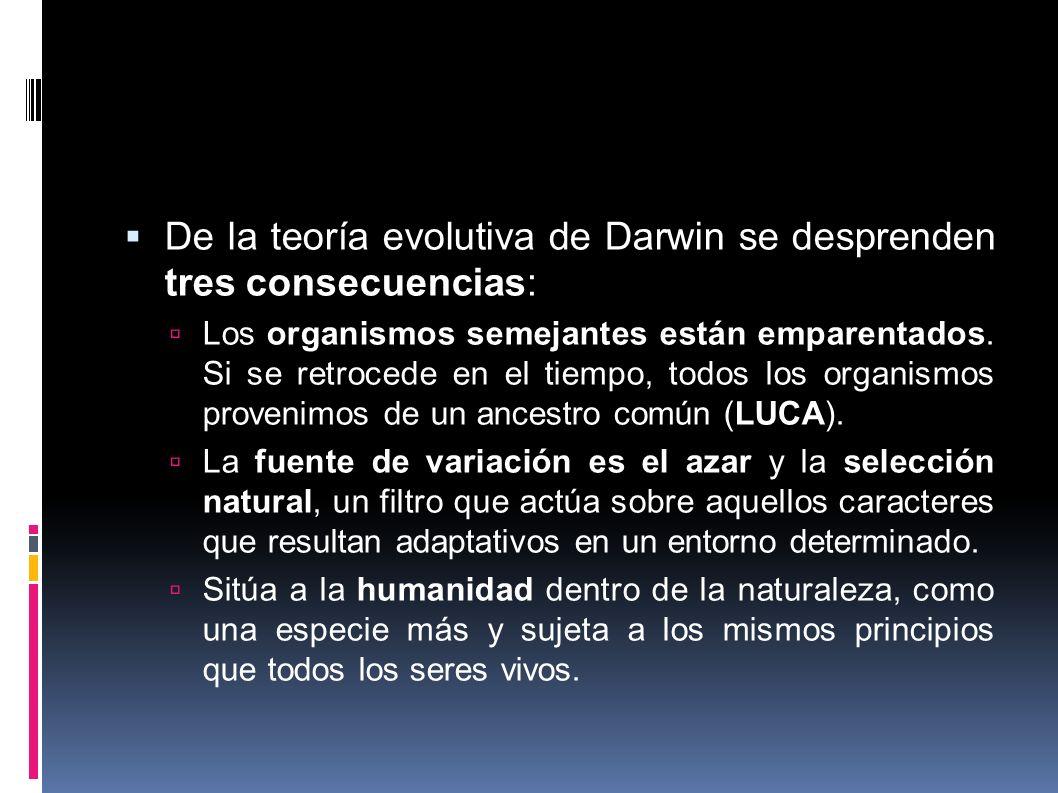 De la teoría evolutiva de Darwin se desprenden tres consecuencias: Los organismos semejantes están emparentados. Si se retrocede en el tiempo, todos l