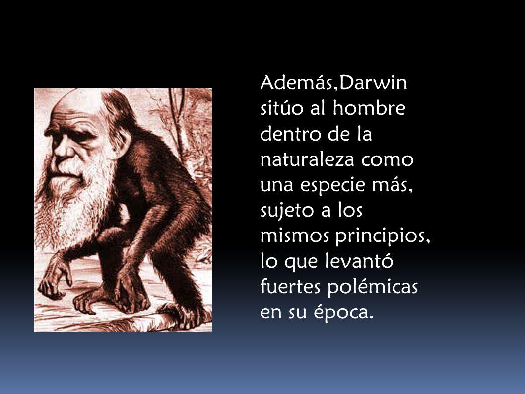 Además,Darwin sitúo al hombre dentro de la naturaleza como una especie más, sujeto a los mismos principios, lo que levantó fuertes polémicas en su épo