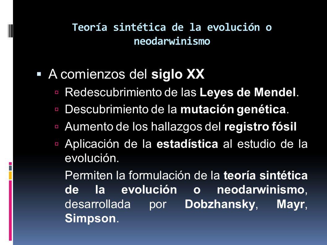 Teoría sintética de la evolución o neodarwinismo A comienzos del siglo XX Redescubrimiento de las Leyes de Mendel. Descubrimiento de la mutación genét