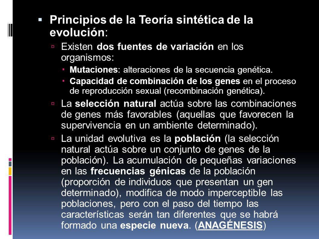 Principios de la Teoría sintética de la evolución: Existen dos fuentes de variación en los organismos: Mutaciones: alteraciones de la secuencia genéti