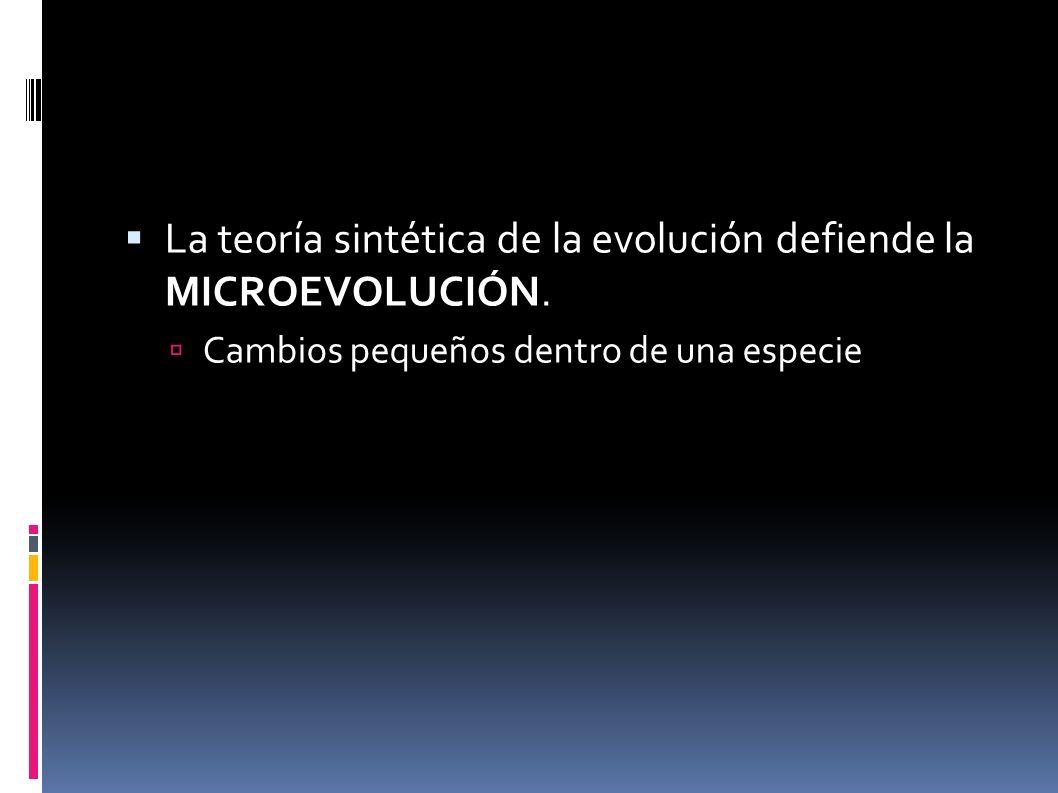 La teoría sintética de la evolución defiende la MICROEVOLUCIÓN. Cambios pequeños dentro de una especie