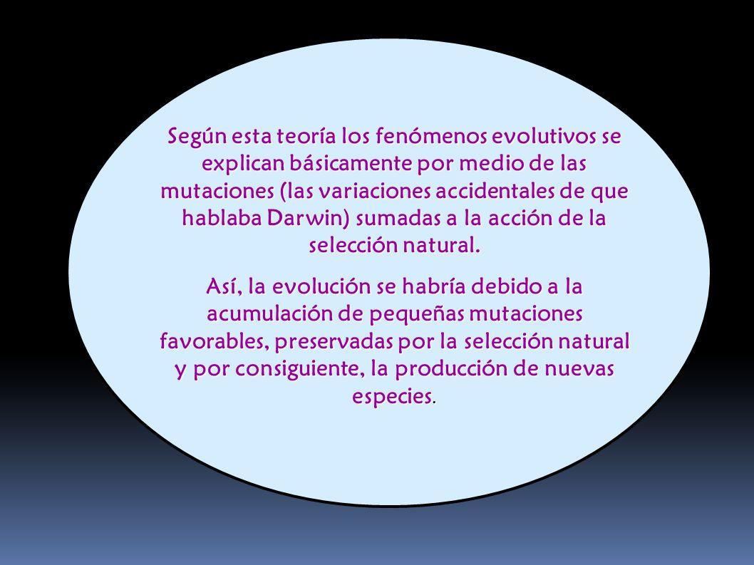 Según esta teoría los fenómenos evolutivos se explican básicamente por medio de las mutaciones (las variaciones accidentales de que hablaba Darwin) su