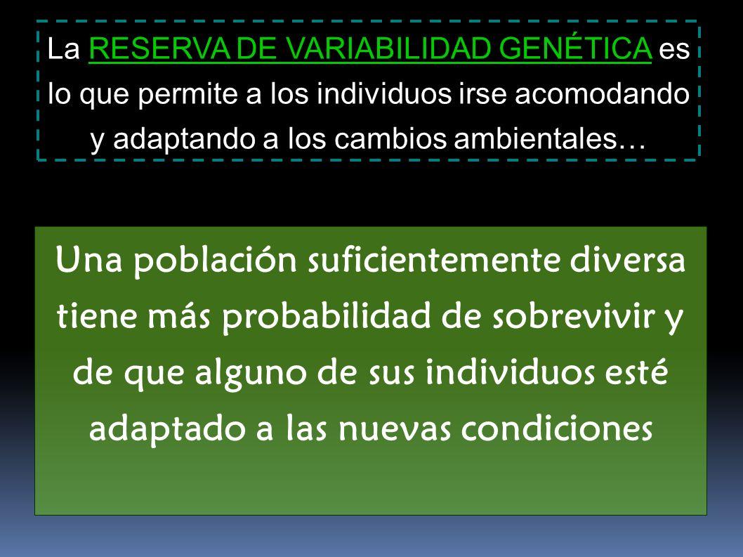 La RESERVA DE VARIABILIDAD GENÉTICA es lo que permite a los individuos irse acomodando y adaptando a los cambios ambientales… Una población suficiente