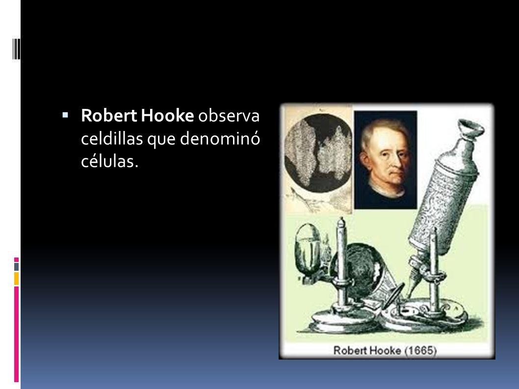 Antoni Van Leeuwenhoeck construyo un microscopio rudimentario, que poseía la capacidad de aumentar la imagen hasta 275 veces.