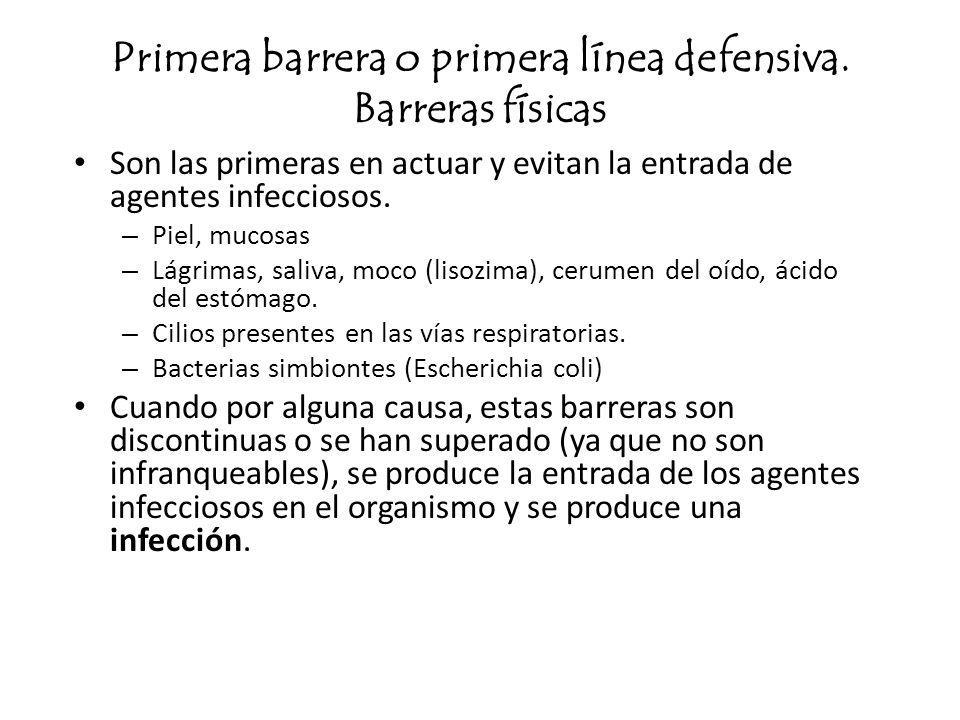 Primera barrera o primera línea defensiva. Barreras físicas Son las primeras en actuar y evitan la entrada de agentes infecciosos. – Piel, mucosas – L
