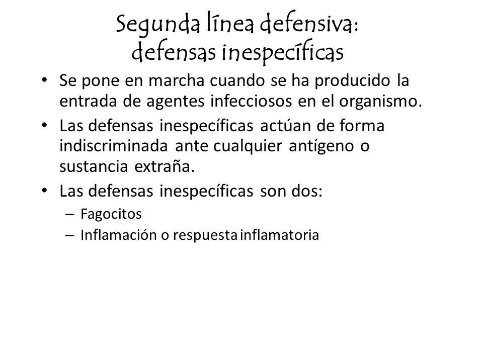Segunda línea defensiva: defensas inespecíficas Se pone en marcha cuando se ha producido la entrada de agentes infecciosos en el organismo. Las defens