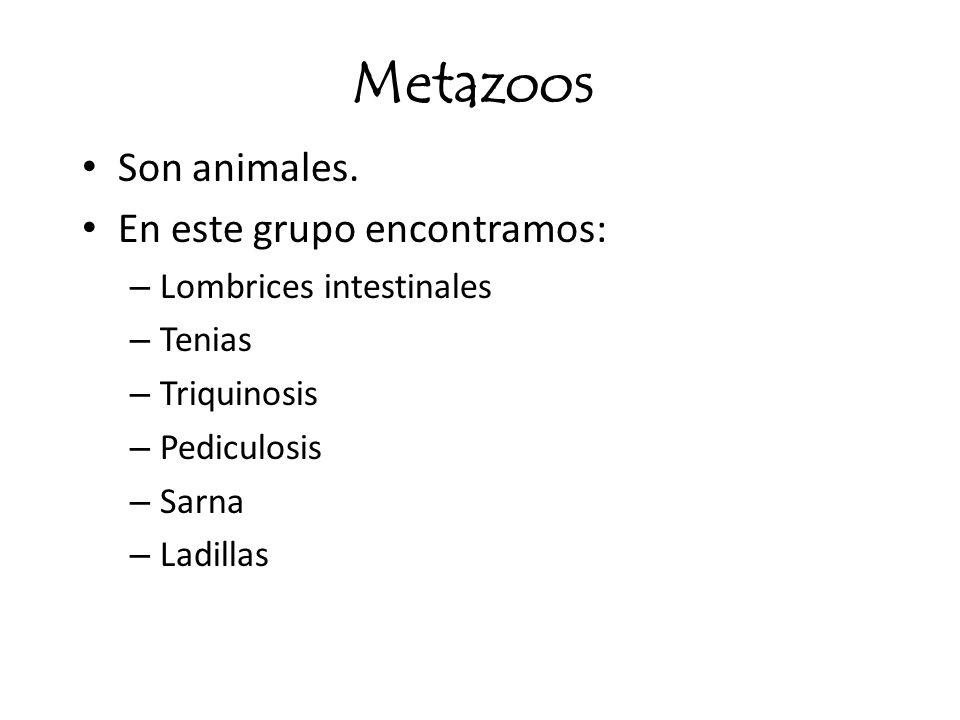 Metazoos Son animales. En este grupo encontramos: – Lombrices intestinales – Tenias – Triquinosis – Pediculosis – Sarna – Ladillas