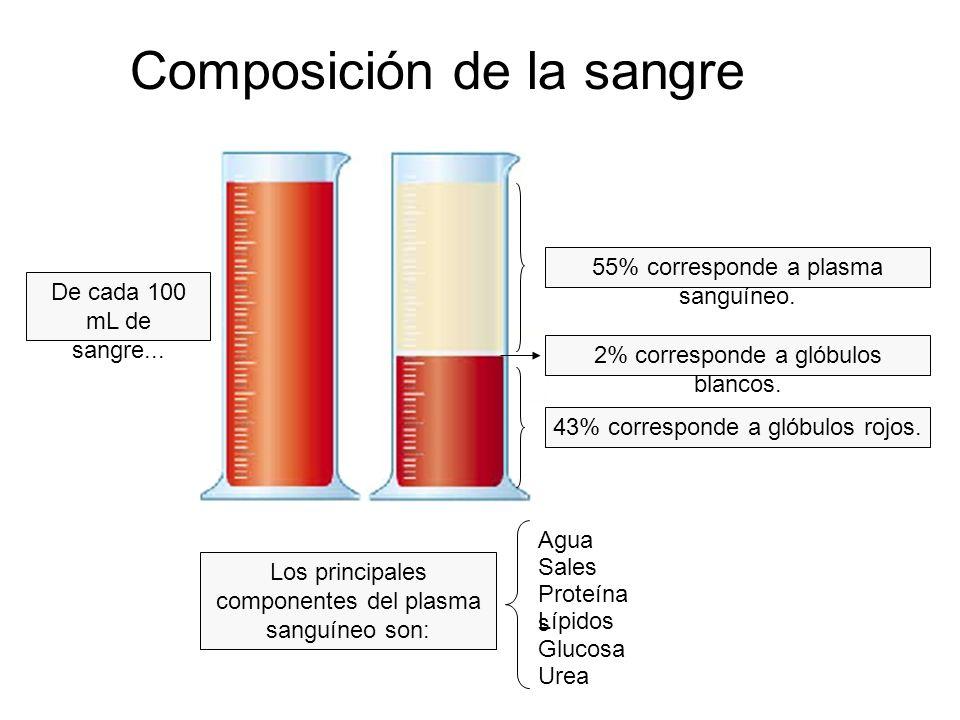 Composición de la sangre De cada 100 mL de sangre... 55% corresponde a plasma sanguíneo. 2% corresponde a glóbulos blancos. 43% corresponde a glóbulos