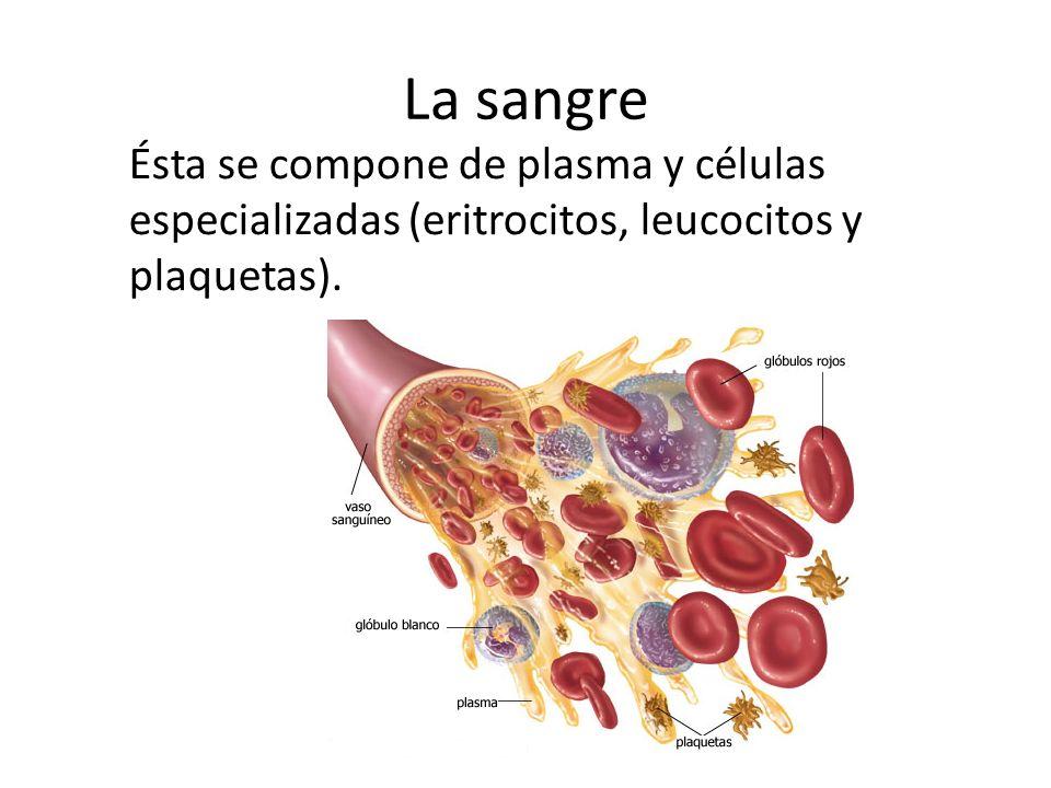 La sangre Ésta se compone de plasma y células especializadas (eritrocitos, leucocitos y plaquetas).